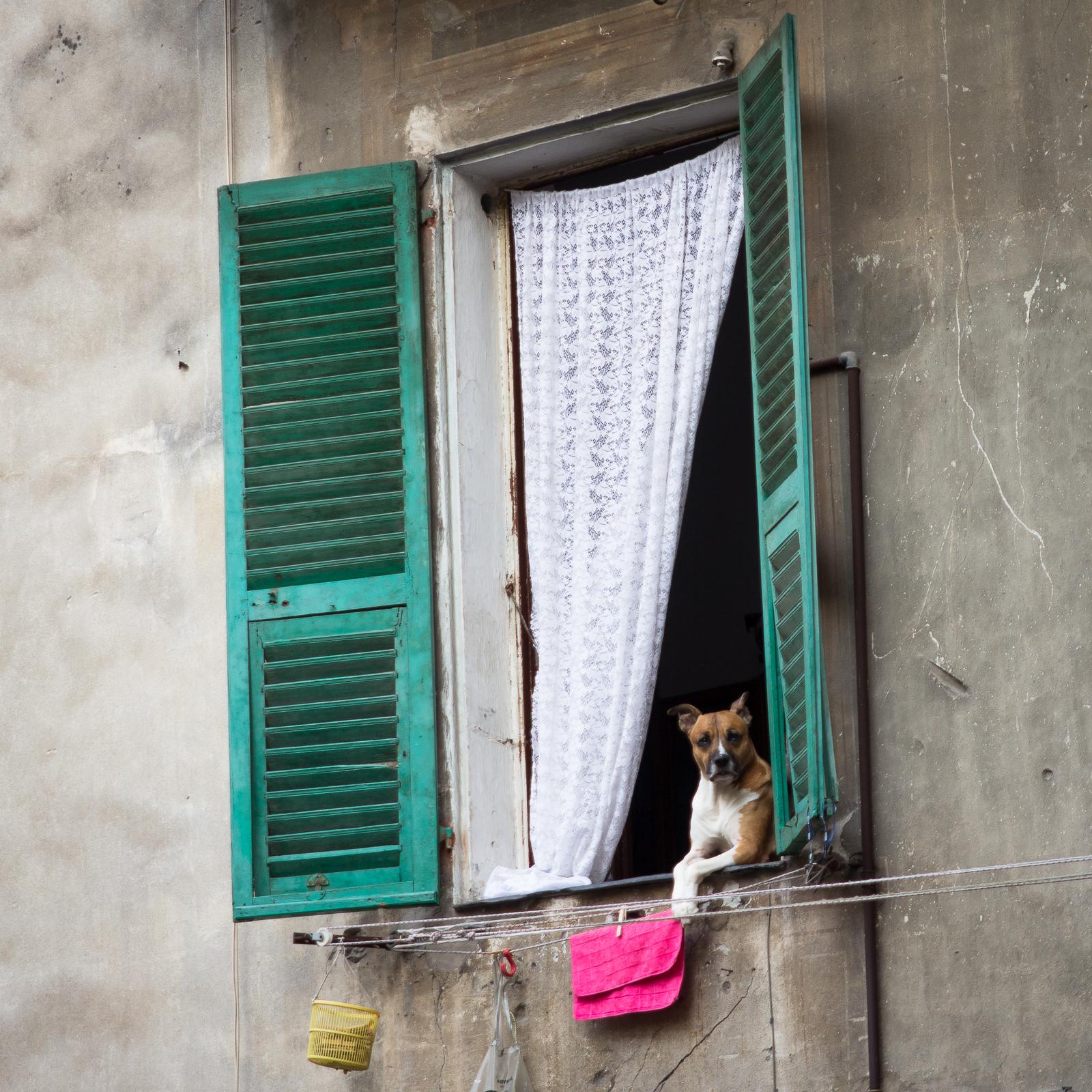 The sceptical dog (Ventimiglia Alta)