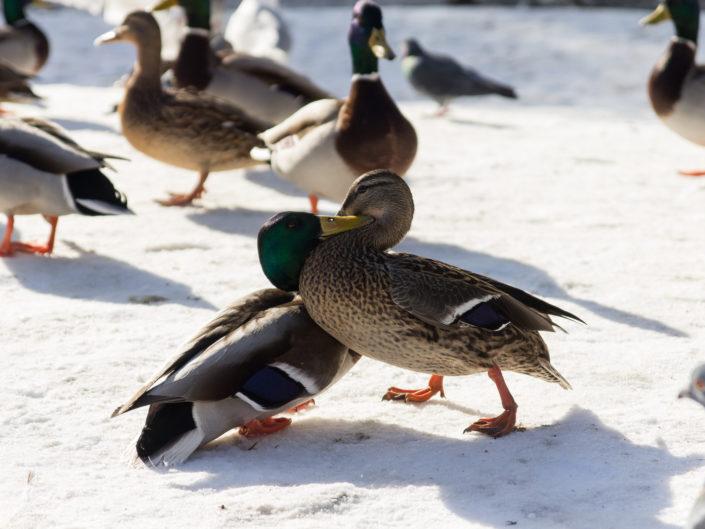 Bird-attack!!