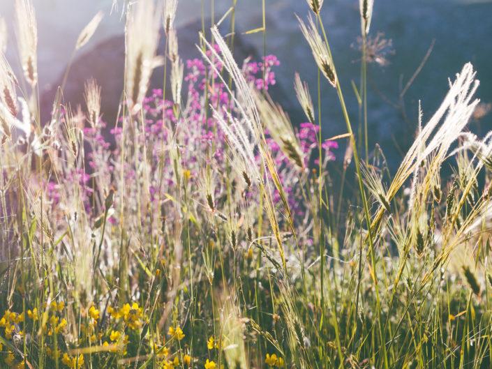 Spring (Matera)