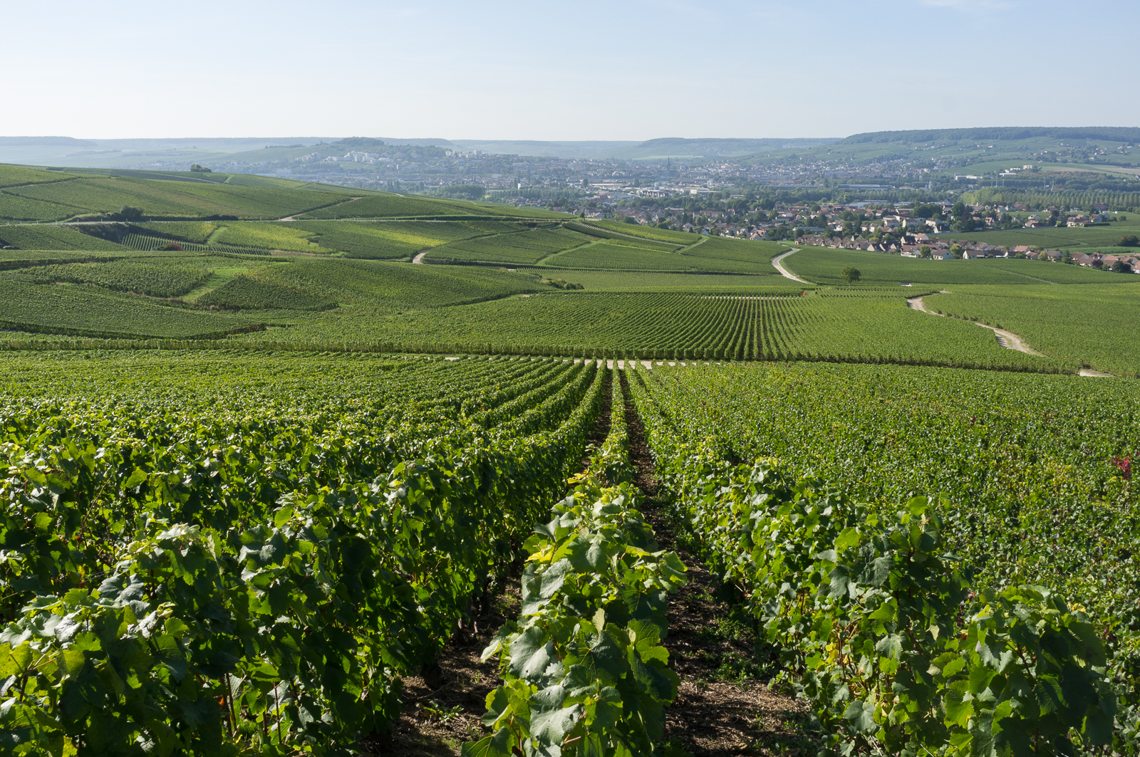 A view towards Epernay