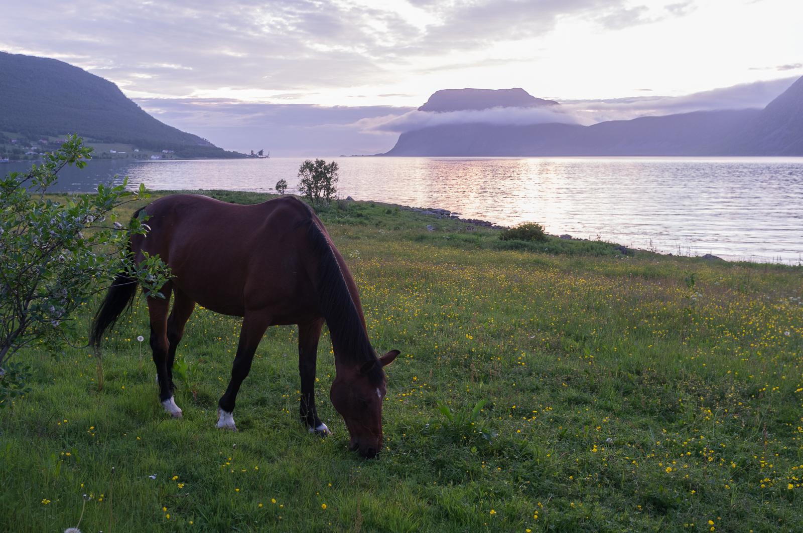 Kværfjord (Harstad) at midnight (July 04)