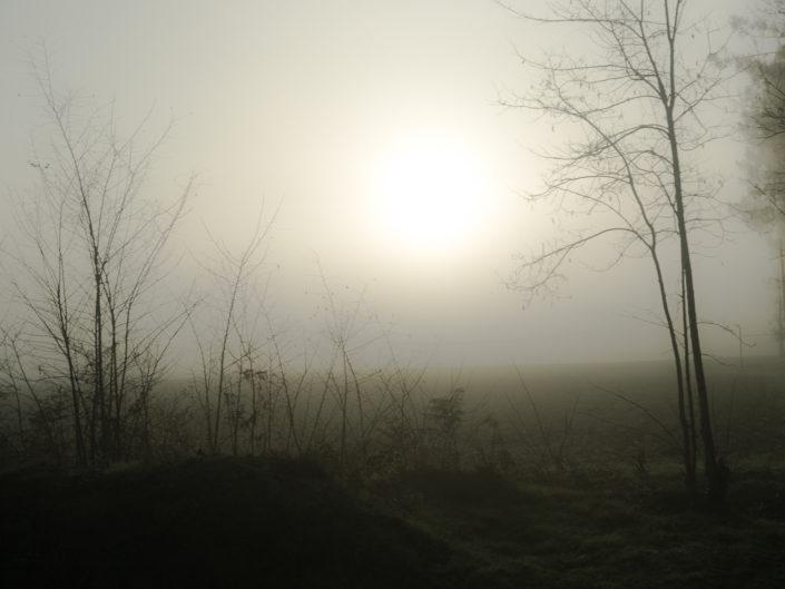 Winter morning in Les Landes