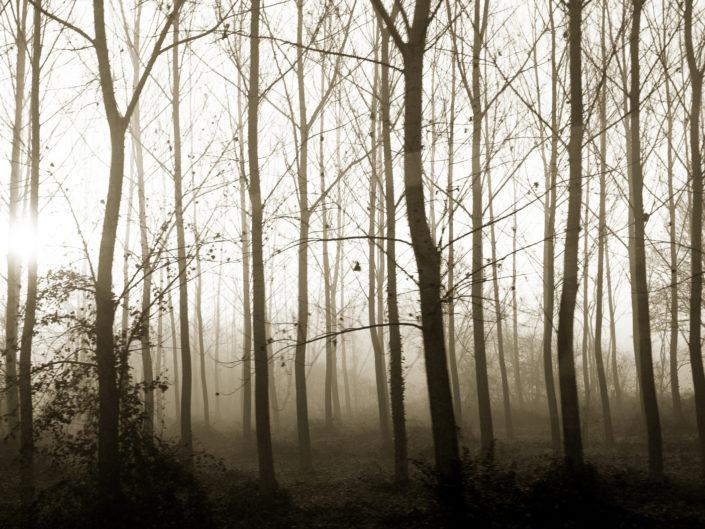Les Landes in the morning fog