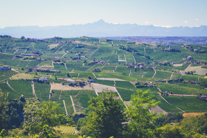 The vineyard landscapes of Piedmont