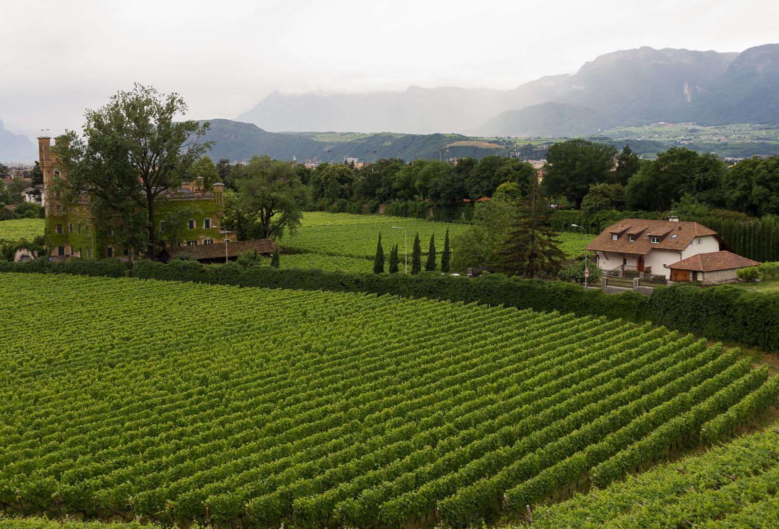 Bolzano - Bosen vineyard