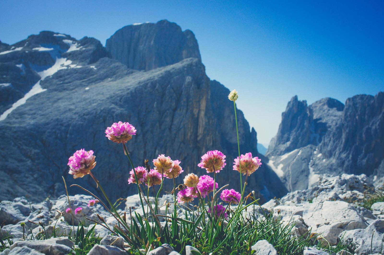 Dolomitic Flora